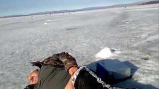 Тюлень наклевался на рыбалке
