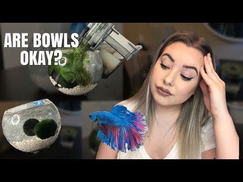 HOW TO SET UP A BETTA BOWL! | are bowls okay for bettas?