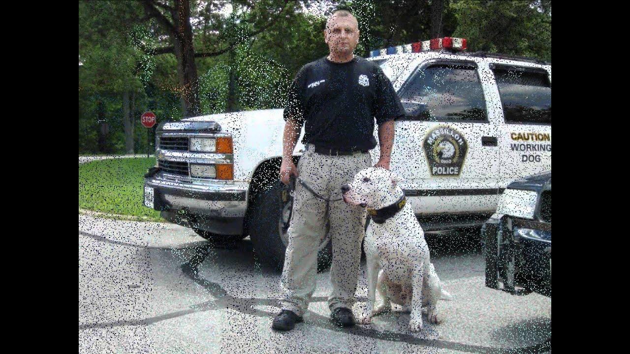 USA - City of Massillon Police K-9 Unit Inca  Dogo Argentino