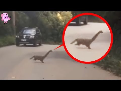 Real Dinosaur Sightings That Have Scientists Baffled