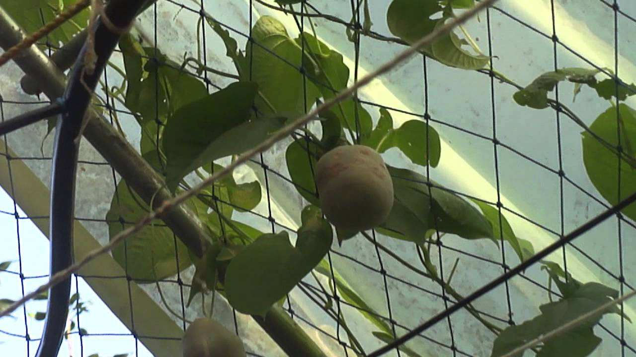 Our Kitchen Garden Our Kitchen Garden At Mangalore Youtube