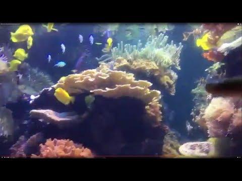 Baltimore, Maryland National Aquarium!