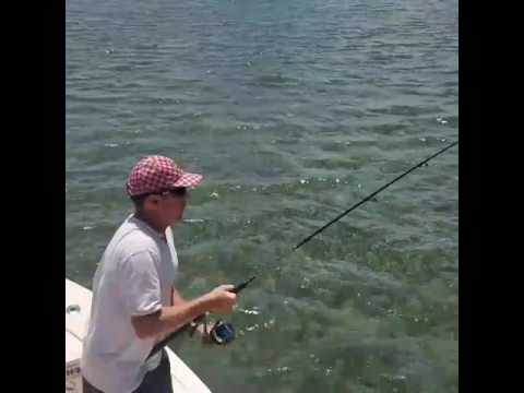 Biscayne bay shark fishing
