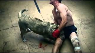 Бой между человеком и собакой(Здравствуйте дорогие зрители этого клипа тут про парня который потерял свою собаку и как ее нашол на ринге..., 2014-01-10T15:51:56.000Z)