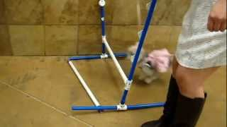 Agility Training At Petsmart (part2)