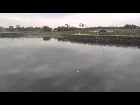 Manchester Ship Canal - Big Carp !!!