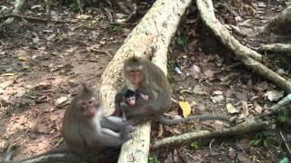 Lucky Newborn Baby Monkey