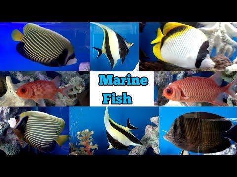 Marine Fish Tank Setup And Marine Fish Aquarium Care