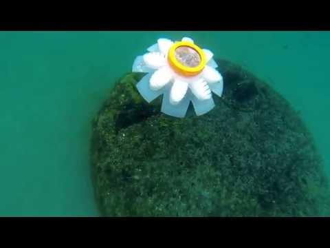 JenniFish Ocean Test