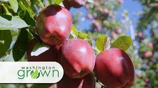 Gambar cover Washington Grown Season 6 Episode 10 Apples
