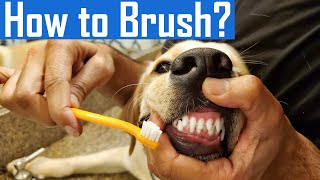 How to Brush Your Dog's Teeth at Home | Brushing My Puppy's Teeth for the First Time | Dog Dental