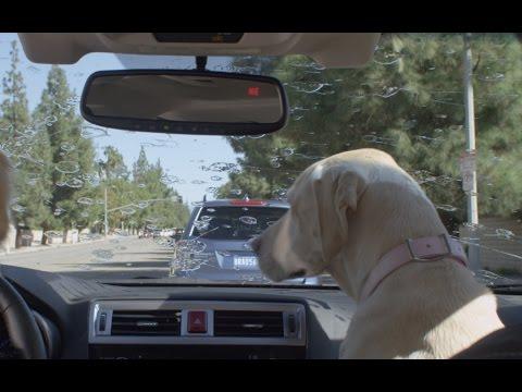 Subaru Dog Tested | Subaru Commercial | Windshield Wiper