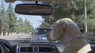 Subaru Dog Tested | Subaru Commercial | Windshield Wiper thumbnail