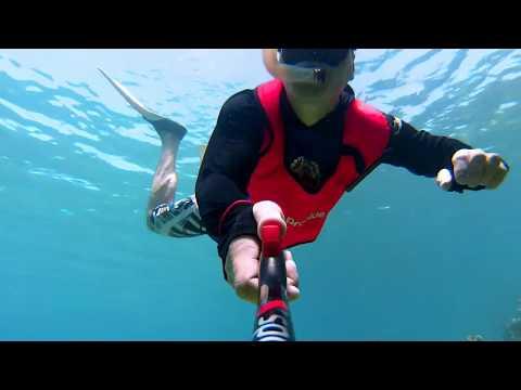 La vie marine du Roatan, Honduras (2ème partie)