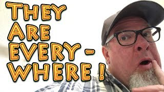 They Are EVERYWHERE   A Big Family Homestead Vlog