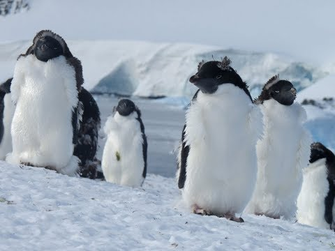 Quest for the Antarctic Circle -  MS Expedition, G Adventures 2014