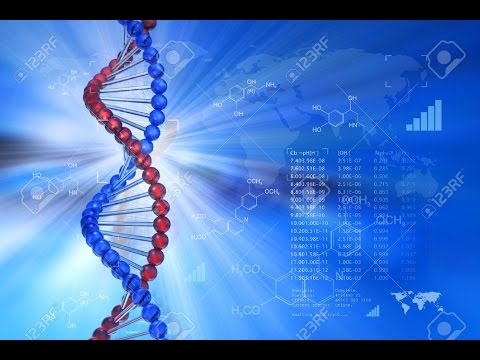 Genetic Modification In Cattles An Issue In Genetic Engineering Technology     -   Best Documentary