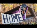 Can't find my home! Cute & funny dachshund dog video!