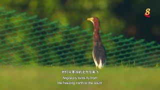 星期二特写 | 飞羽 第3集:林鸟篇 - YouTube