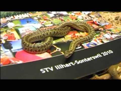 Werbespot Kalender 2010 des STV Illhart-Sonterswil