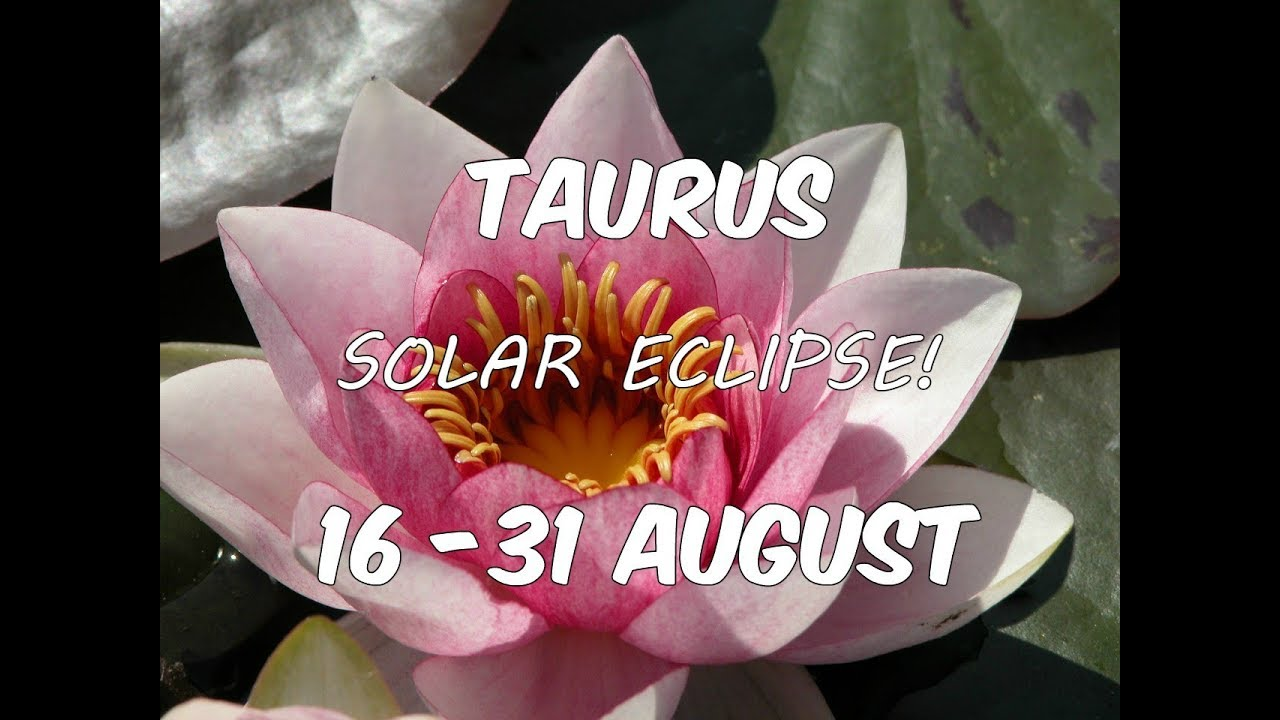 Taurus In Depth Solar Eclipse General Tarot Reading 16 31 August
