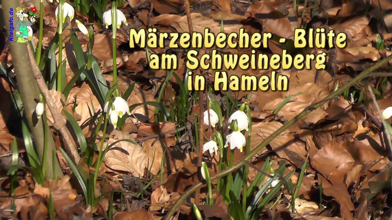 Schweineberg Hameln