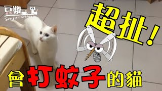 【豆漿 - SoybeanMilk】會打蚊子的貓!! 好扯阿