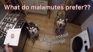 Raw food test   Alaskan malamute raw v cooked meat