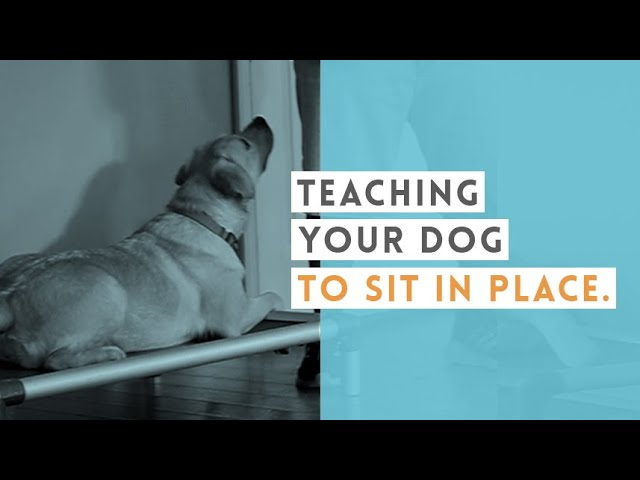 Teach Your Dog to Sit In Place   Video