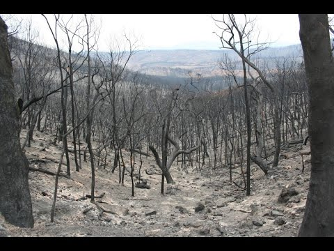 Online forum: Fire in the Landscape -  fire in the Australia