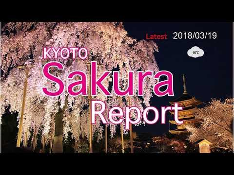 Kyoto Sakura report 2018/03/19