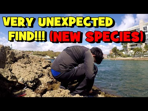 I Caught A NEW SPECIES From A VERY UNUSUAL PLACE!! (SURPRISE CATCH)