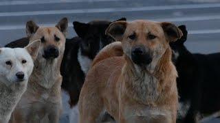 大きめの犬が多い交通公園隣の駐車場を根城にしているグループ 周りの犬...