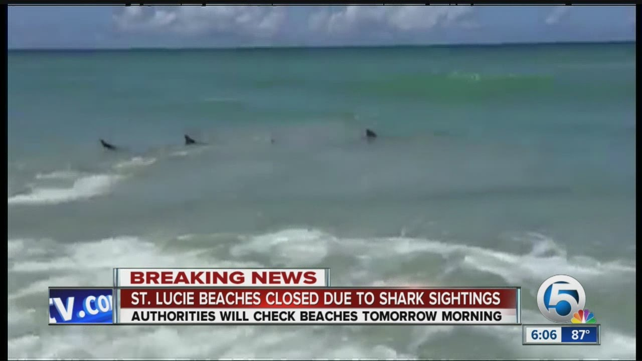 Florida Beaches Closed Sharks