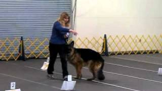 German Shepherd Dog Rally Novice Obedience