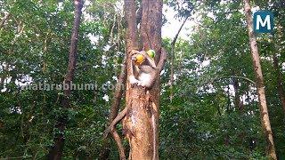 Athirappilly Monkey Drinking Soft Drink I Mathrubhumi screenshot 4