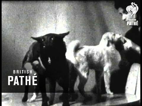 Russian Space Dog (1961)