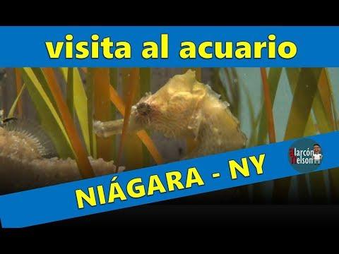 Una visita al acuario de Niagara Falls New York State