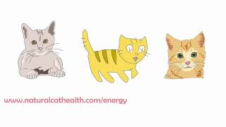 How To Keep Your Cats Urinary Tract Healthy