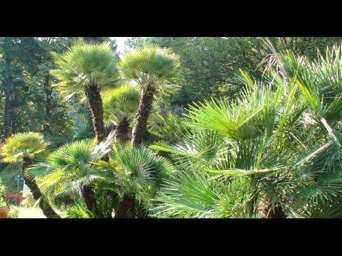 Batumi - Batumi Botanical Garden - ბათუმის ბოტანიკური ბაღი - ბათუმი - Adżaria - Morze Czarne