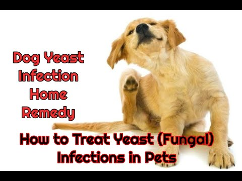 Dog Yeast Infection Home Remedy | How To Treat Yeast Fungal Infections In Pets