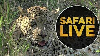 safariLIVE - Sunset Safari - May, 23. 2018 thumbnail