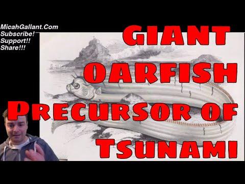 Japanese Oarfish Sightings, Precursor To Massive Earthquake / Tsunami?