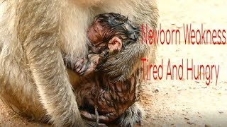 Newborn Lizza Weakness health And Hungry Food,Baby Wet Cool And Tired/Sweet Baby Monkey