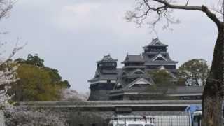 2013 3月25日 熊本城の桜です! 後半は、大観峰付近からの阿蘇の街の風...