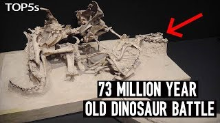 5 Most Amazing & Unbelievable Fossils Ever Unearthed