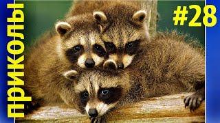Приколы с животными 2016 НОВИНКИ,funny animals #28