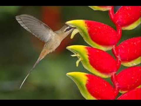 O Voo do Beija Flor