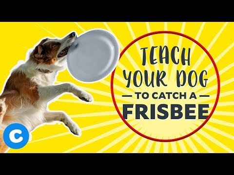 Cool Dog Tricks: Catch a Frisbee