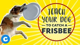 Cool Dog Tricks: Catch a Frisbee